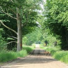 Side View Of Deer Crossing The Road