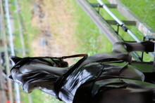 Carousel Horse In Park