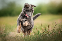 Mixed Breed Puppy Cute Dog Cur...