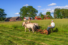 Hay Mowing With Horses In A Rural Landscape
