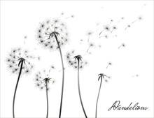 Dandelion Silhouette On White Background. Vector Illustration.