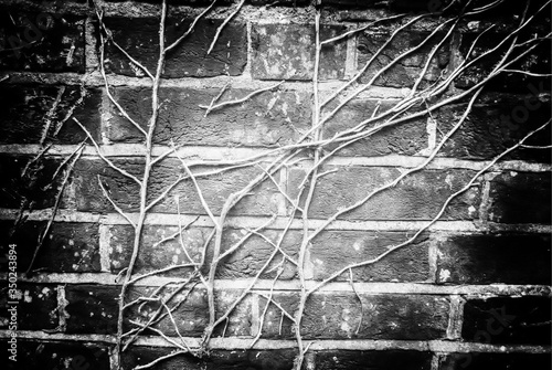 Canvas Detail Shot Of Creepers On Brick Wall