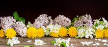 Apple Tree Dandelion Lilac Flo...