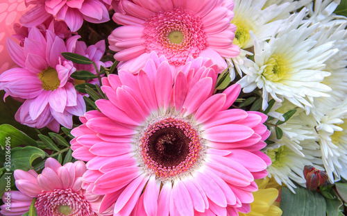 a beautiful combination of daisies and Barberton Daisy. Canvas Print
