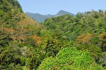 Lush Foliage In Boquete Includ...