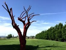 Dead Tree On Grassy Field Agai...