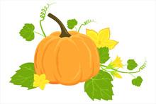 Hand Drawn Ripe Pumpkin And Fl...