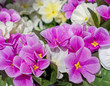 canvas print picture - violet and white colored artficial flowers bouquet close up, blurred background