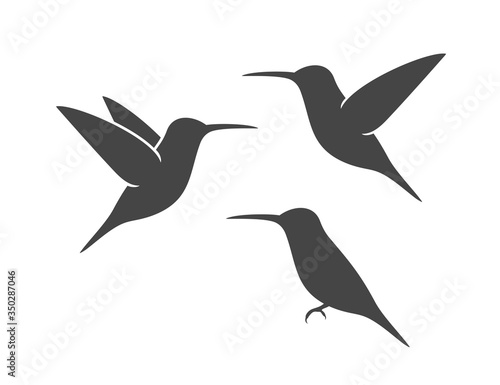 Fototapeta Hummingbird silhouette