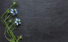 Photography Of Nigella Flowers On Slate For Message, Announcements, Cards Or Signs