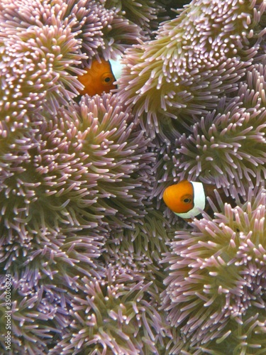 Photo High Angle View Of Clown Fish Amidst Sea Anemone