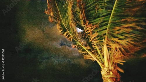 Fotografija Windswept Tree Against Cloudy Sky At Night