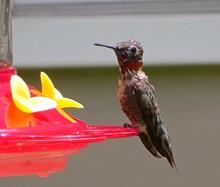 Hummingbird On Bird Feeder
