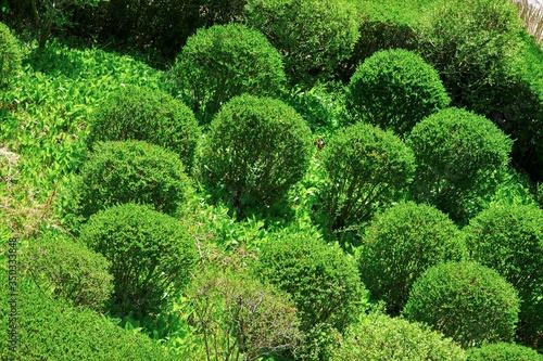 Pruned green plants in the garden