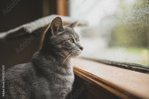 A Cat Watches out the Window