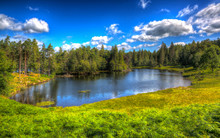 The Lake District National Park England Tarn Hows Near Hawkshead With Trees In Colourful HDR
