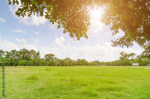 Fototapeta Scenic View Of Trees On Field Against Sky obraz na płótnie