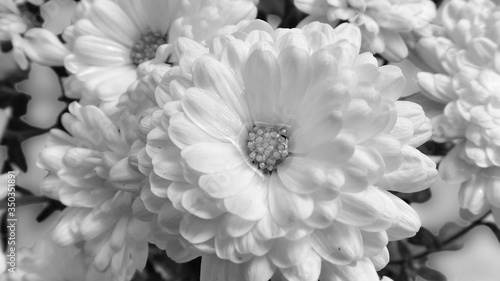 Fototapety, obrazy: High Angle View Of Flowers