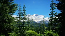 Scenic View Of Trees And Snowcapped Mountain Against Clear Blue Sky