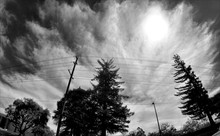 Low Angle View Of Trees And Power Lines Against Cloudy Sky