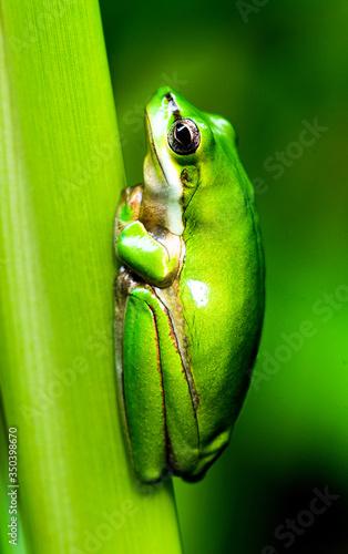 Photo Beautiful frog