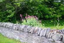 Stone Wall Against Trees