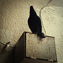 Low Angle View Of Pigeon On Metal Box Against Wall