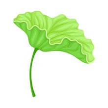 Above Water Lotus Leaf With Stem Isolated On White Background Vector Illustration