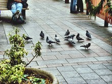 Group Of Birds On Stone Tile Outdoors