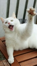Close-up Of Cat Reaching