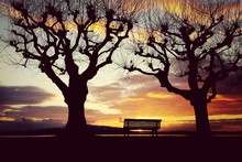 Empty Bench And Two Bare Trees...