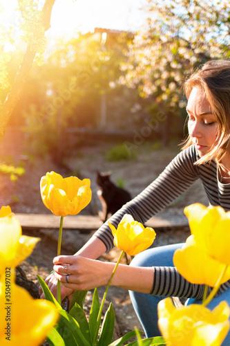Fototapeta Caucasian blonde woman cuts yellow tulips in her garden. In the background, a sunshine garden and cat. Vertical obraz
