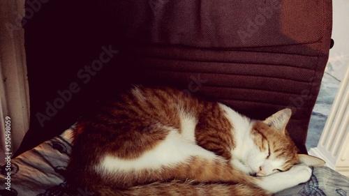 Fotografiet Ginger Cat Sleeping On Chair