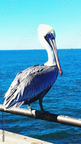 Foto Close-up Of Pelican Perching On Railing By Sea Against Sky