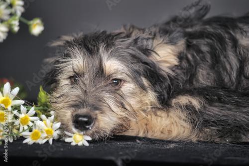 cute black and brown dog mongrel   terrier Wallpaper Mural