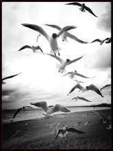 Seagulls Flying In The Sky Over The Sea
