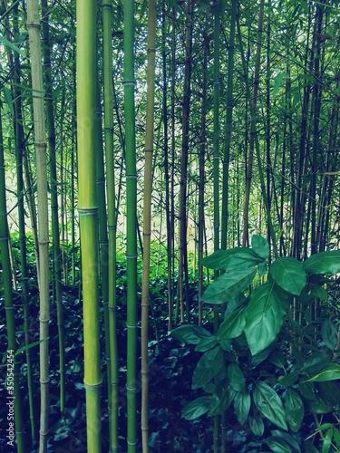 Detail Shot Of Green Bamboos Poster Mural XXL