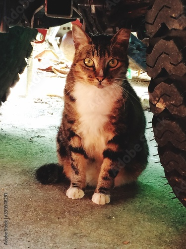 Portrait Of Cat Sitting By Tire Canvas Print