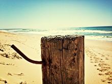 Tree Stump On Beach