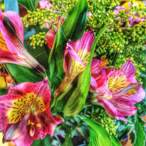 Fotografering Close-up Of Pink Stargazer Lily Flowers