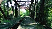 Train Trestle Amidst Trees