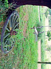 Abandoned Wagon Wheel By Tree On Grassy Field