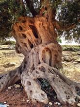 Weird Tree Trunk