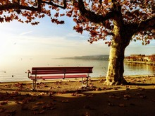Park Bench Under Autumn Tree A...