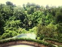 Pond In Formal Garden