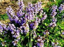 View Of Purple Wildflower