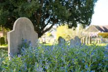 Abundance Of Wild Blue Flowers...