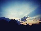 Fototapeta Na ścianę - Low Angle View Of Silhouette Trees Against Sky