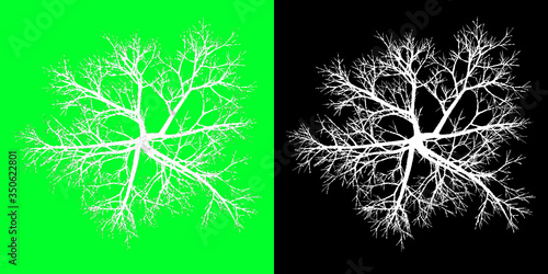 Valokuva Top View Winter Tree 3D Render PNG Chroma Key Bakcground with Opacity Map for Cu