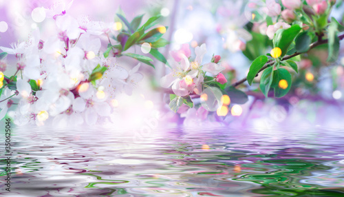 Fototapety, obrazy: Spring first flowers close-up. Reflection in water. Light abstract floral background with bokeh